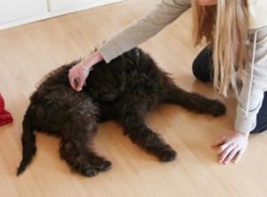 platz hund beibringen